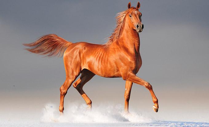 vétérinaire ostéopathe équin