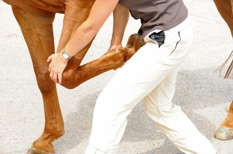 Ostéopathe animalier : les motifs de consultation