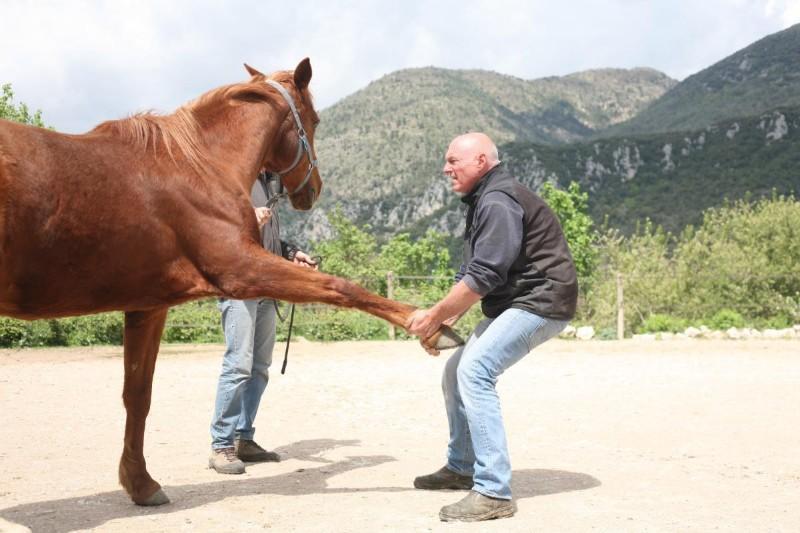 ostéopathie animale : l'approche de votre vétérinaire