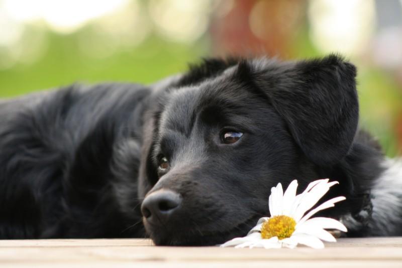 vétérinaire ostéopathe canin
