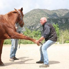 Ostéopathe pour animaux : les interventions